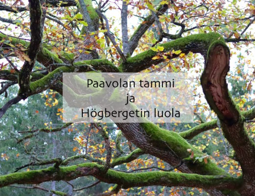 Paavolan tammi ja Högbergetin luola